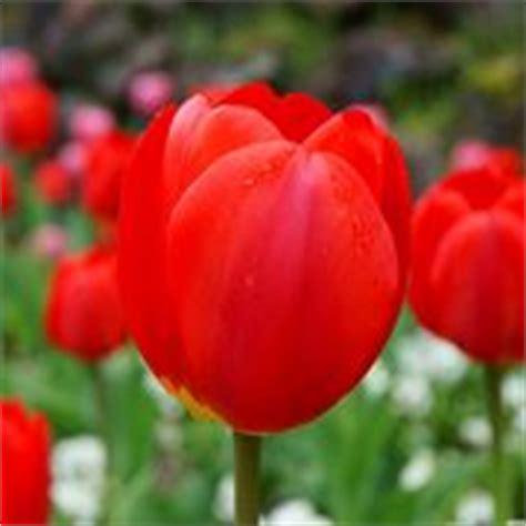 fiori dell amicizia significato dei fiori fiori