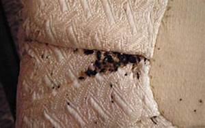 bed bug mattress removal bed bug infested furniture With how to remove bed bugs from sofa