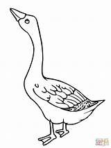 Goose Coloring Pages Geese Printable Embroidery Birds Canada Para Supercoloring Flock Duck Program Cross Bird Popular Craft Coloringhome Gooses Salvo sketch template