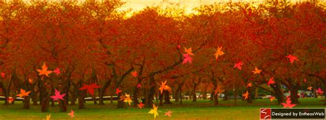 bright breezy autumn themed facebook timeline