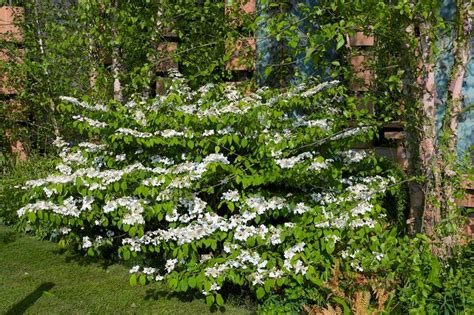 plants that grow in clay soil and shade 1000 images about clay landscaping on pinterest trees and shrubs enabling and sun