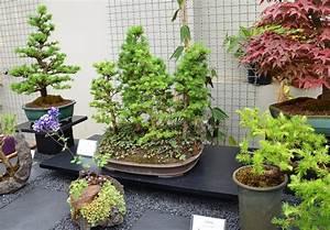 Bonsai Garten Hamburg : bonsai im garten bonsai im garten ein hauch von fernost ~ Lizthompson.info Haus und Dekorationen