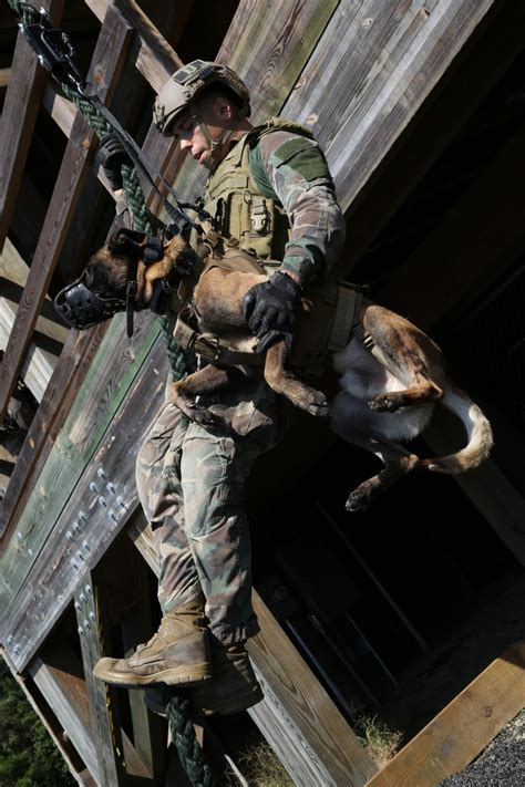 dvids news marsoc multi purpose canine handlers train