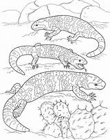 Lizard Coloring Pages Lizards Fat Desert Printable sketch template