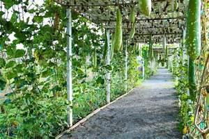 Pflanzen Für Pergola : sonnenschutz alternativen zum sonnenschirm pina design ~ Sanjose-hotels-ca.com Haus und Dekorationen