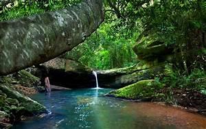 Nature, Landscape, Forest, River, Moss, Rock, Ferns, Trees, Waterfall, Shrubs, Wallpapers, Hd
