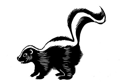 Skunk Clipart Best Skunk Clipart 13863 Clipartion