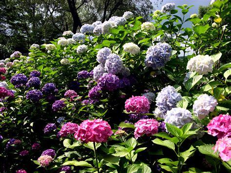 flowers for a garden garden wallpaper free free download wallpaper dawallpaperz