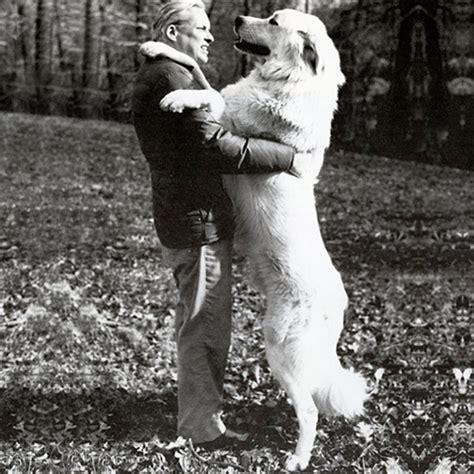 anatolian shepherd dog dog breed information