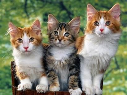 Wallpapers Cat Cats Desktop