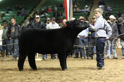 Candid Shots Of Andrew Hodges Grand Champion Prospect