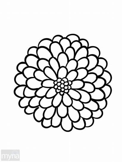 Coloring Flower Flowers Simple Adult Pages Drawing