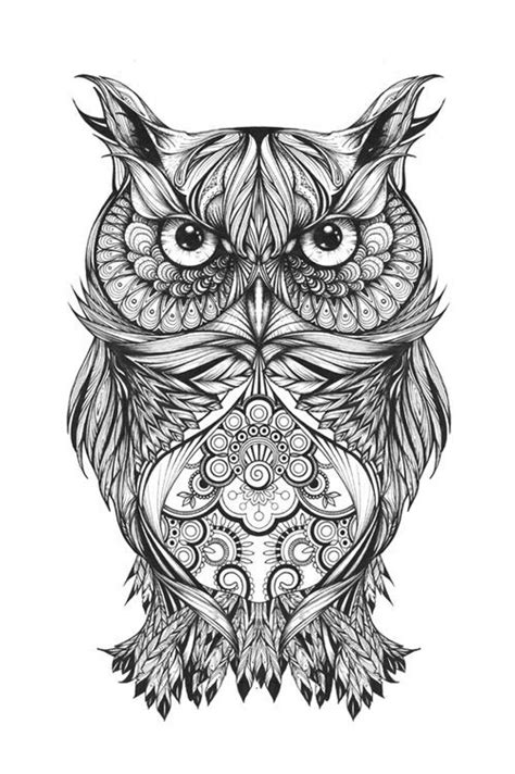 owl drawings ideas  pinterest owl sketch owl