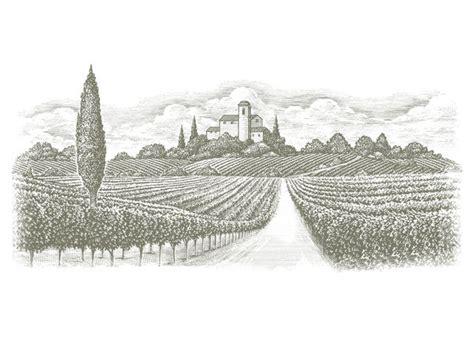 steven noble illustrations italian vineyards