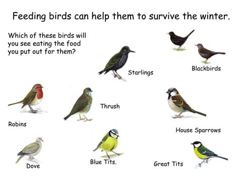 ppt feeding birds can help them to survive the winter
