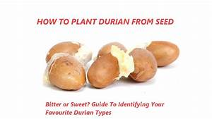 How To Grow Durian From Seed