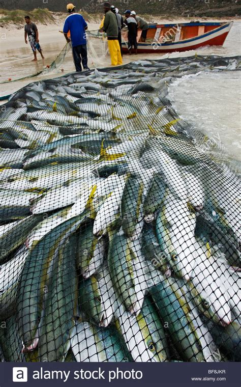 Fishing Boat Net by Fishing Net With Fish Www Pixshark Images