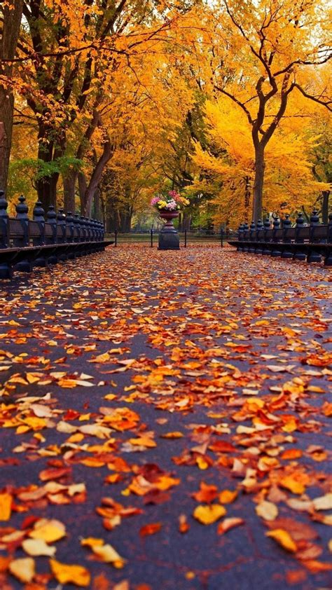 fall pictures  wallpapers  background pictures