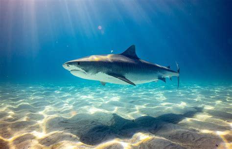 shark wallpapers  hd   hq unsplash