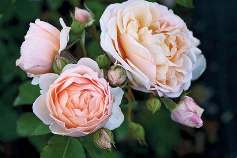 nomi di fiori fiori ecco dove nascono le con i nomi degli stilisti