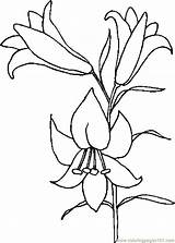Lily Coloring Pages Easter Drawings Printable Lilies Flower Drawing Outline Clipart Lilly Holidays Tattoo Coloringpages101 Flowers Template Library Stargazer Patterns sketch template
