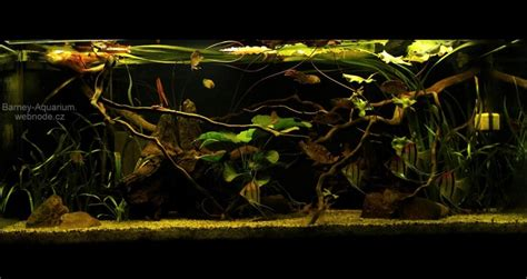17 Best images about Biotope on Pinterest Underwater