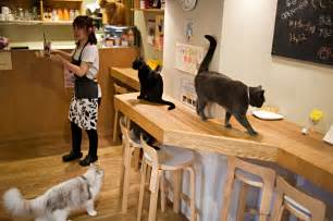 cat cafe in pictures time in japan cat caf 233 s al jazeera