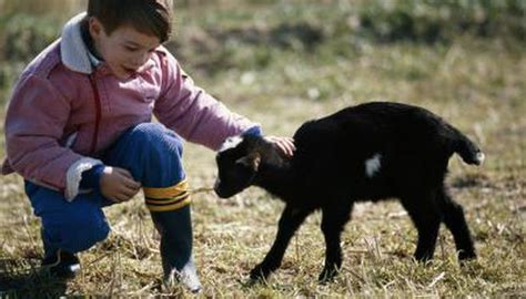 goat vaccination deworming animals momme