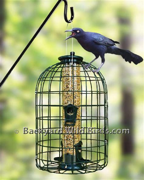 grackle proof bird feeder