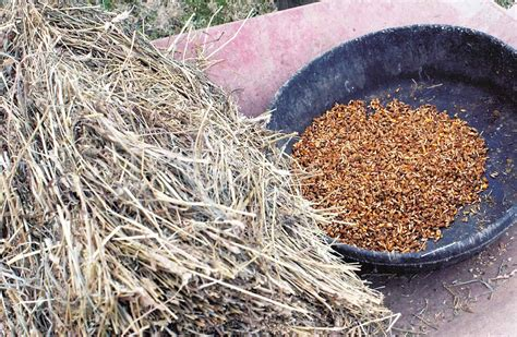 horse feeds types energy grain horses diet feed hay food grains equine thehorse performance carbohydrates hacks track diets feeding advertisement
