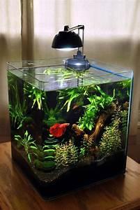 Optimale Aquarium Temperatur : best 25 betta tank ideas on pinterest betta aquarium betta fish tank and fish tank ~ Yasmunasinghe.com Haus und Dekorationen