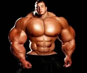 Muscle  U2013 Page 4  U2013 Weightology