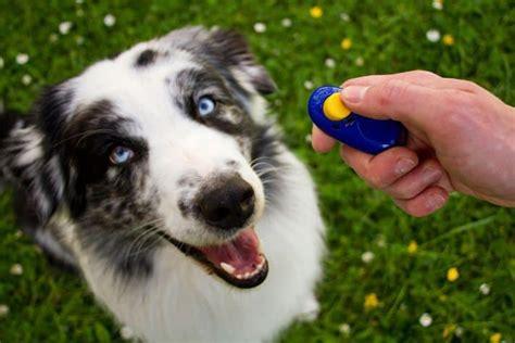 click train  dog tips  ideas vetbabble
