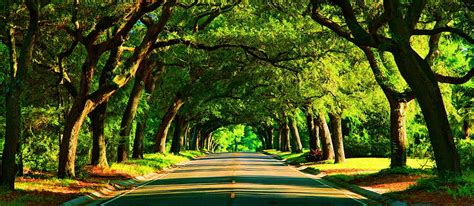 canap tress photo of the week a canopy road in florida