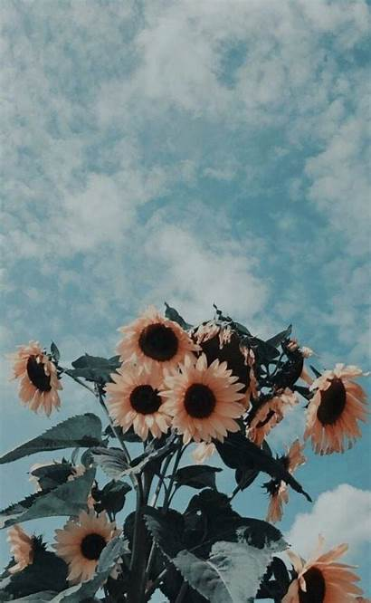 Aesthetic Wallpapers Backgrounds Iphone Phone Sunflowers