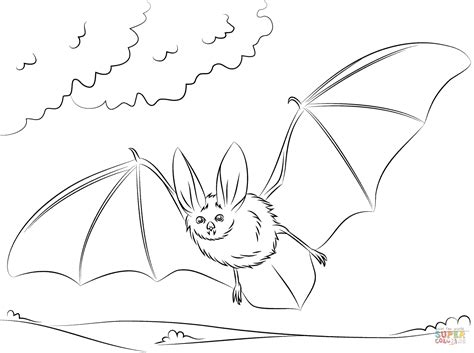 townsends big eared bat coloring page  printable