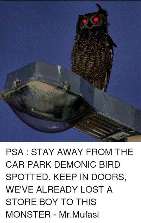 keep birds away from car bing images