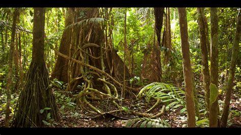 amazon jungle documentary national geographic youtube