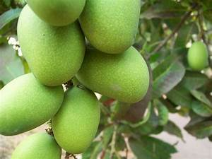 The Nature's Market: Philippine Mangoes, Mango Chips, Sun ...