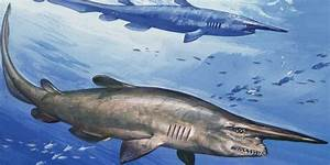 Scary-Looking Goblin Shark Caught Off Australian Coast ...