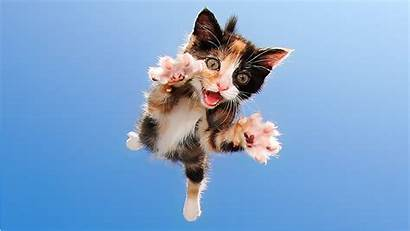 Cat Kittens Today Pounce Adorable Flying Tease