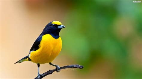 bird colors different color birds s hd wallpapers photos 2014 top 3