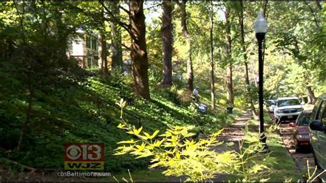 Paradise Lost? Pipeline Threatens Hundreds Of Trees At