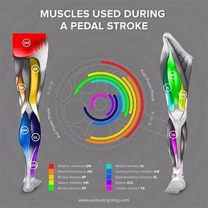 Muscles That You Use Whilst Cycling