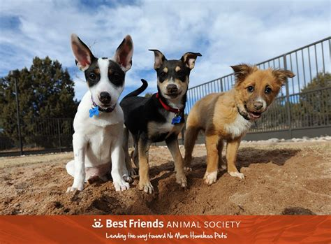Best Friends Animal Best Friends Animal Society