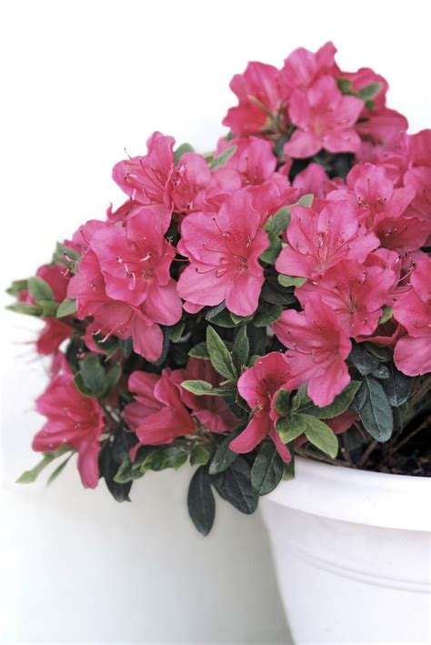 top 10 wonderful plants for small containers top inspired