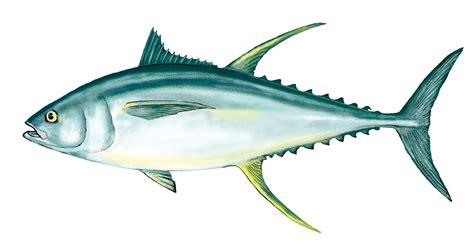 tuna fish pepper crusted seared ahi tuna with tahini blue galley