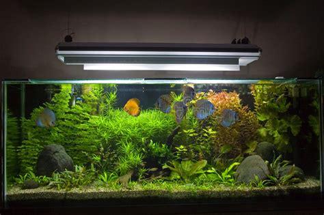 aquarium eau douce tropical aquarium d eau douce tropical photos libres de droits image 6119838
