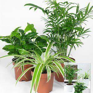 Pflanze Für Dunkle Räume : 11 zimmerpflanzen f r dunkle ecken pflanzen ananas ~ A.2002-acura-tl-radio.info Haus und Dekorationen