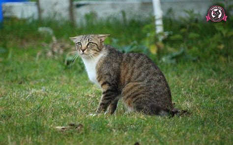 ears cat cats why put fur short flatten angry kitten scares makes them